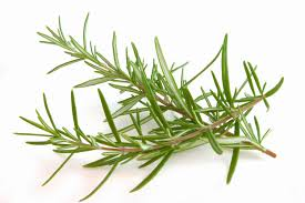 Long Healthy Hair Rosemary Rinse