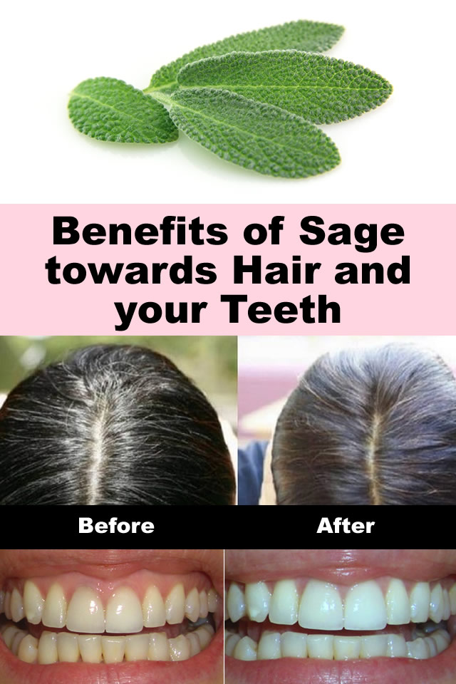 Benefits of Sage towards Hair and your Teeth